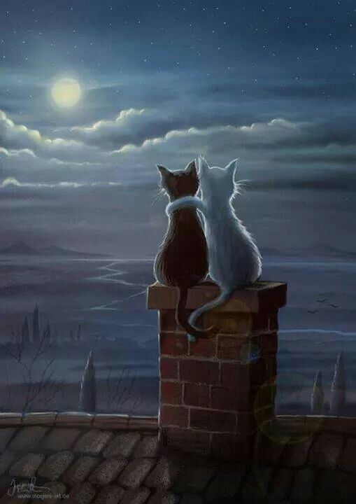 Enjoying the evening, black and white cat painting, enjoying the moon on the roof top. ... that would be my cats!