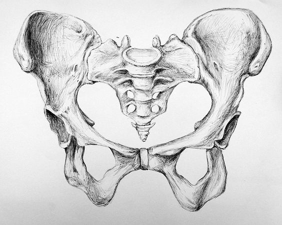 Davier – reivad Pen rendering of hip bone. Actual size is A3