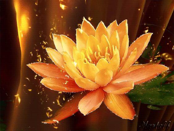 цветы кувшинки - Google претрага: