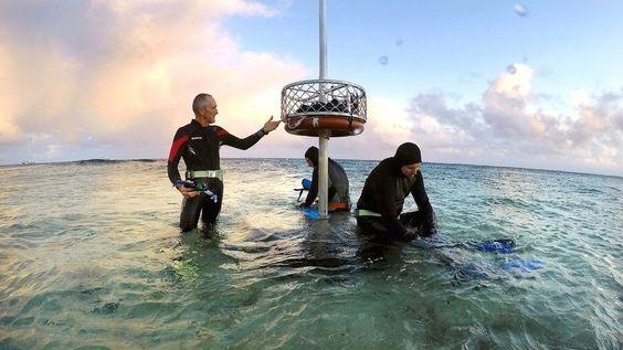 Klimawandel : Australien lässt Klimaschäden aus UN-Report streichen Aus Sorge um den Tourismus will Australien lieber nicht in einem Unesco-Bericht zum Klimawandel auftauchen. Denn dieser hatte den Zustand des Great Barrier Reefs beklagt.