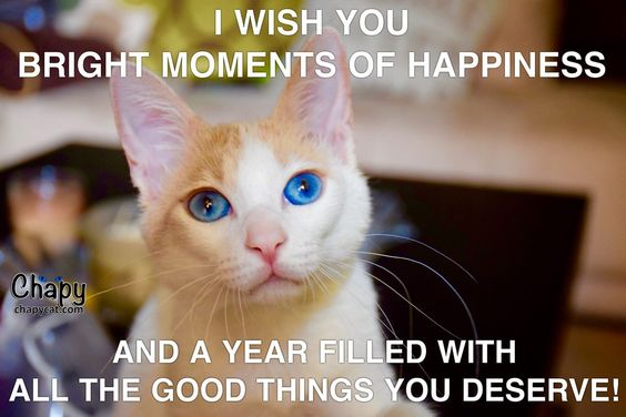 Happy New Year Cat-lovers!