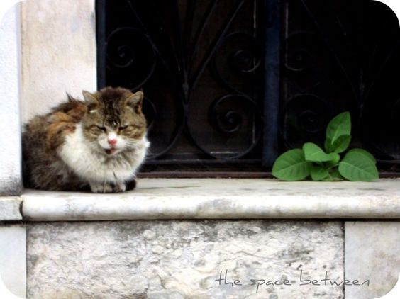 a cat on a marble ledge with a weed