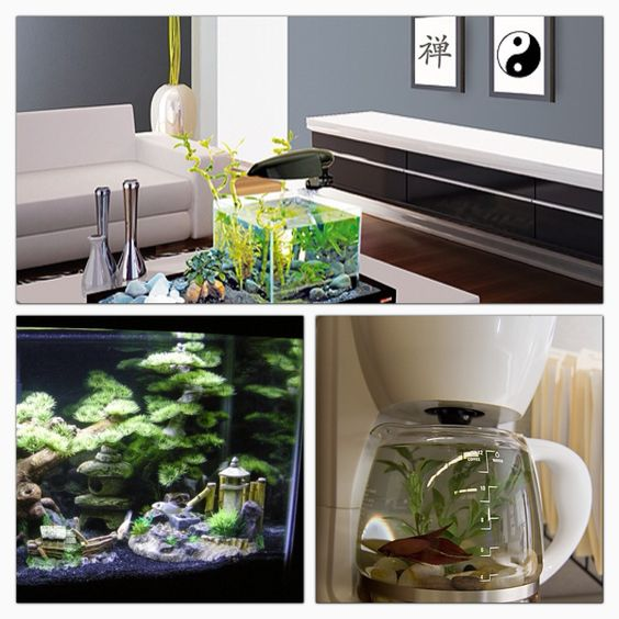 Some cool fish tank ideas coffee machine living room for Cool fish tank themes