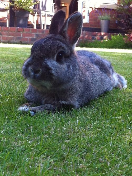 Bunny spends Bunday relaxing on the grass - July 29, 2012