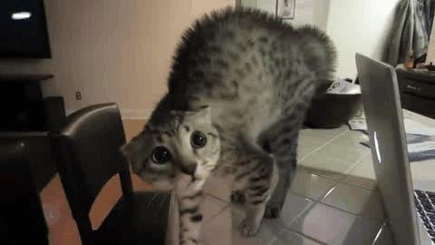 reações-trabalho-gatos-7