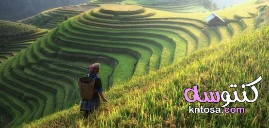 تعريف المدرجات الزراعية Farmland Outdoor Vineyard
