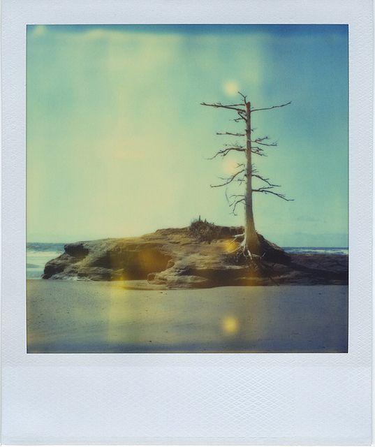 Moving Towards Petrification. Polaroid by Jamie Larson, via Flickr