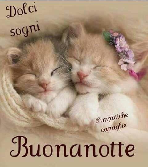 Pin Di Melinda Su Smiling Cats Foto Di Animali Divertenti