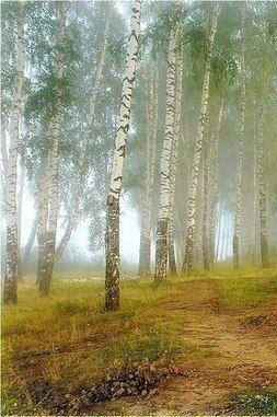 # nature #
