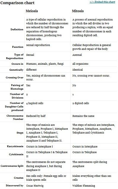 Printables Comparing Mitosis And Meiosis Worksheet Answers Biology chart meiosis vs mitosis biology chapter 11 pinterest biology