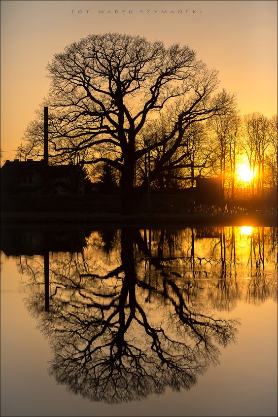 sunset - tree