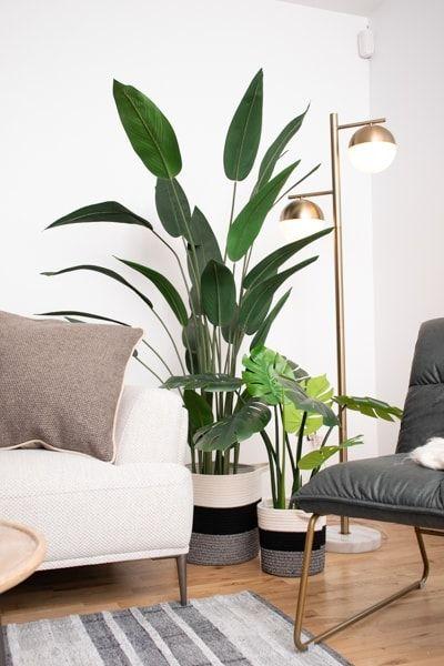Strelitzia als grote kunstplant in je woonkamer