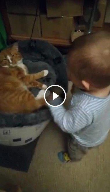 Olha como esse gato é paciente!
