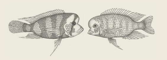 Does evolutionary theory need a rethink? : Nature News & Comment (8 Oct 2014). See also: http://www.geneticliteracyproject.org/2014/10/28/can-evolution-can-be-explained-by-genes-alone/
