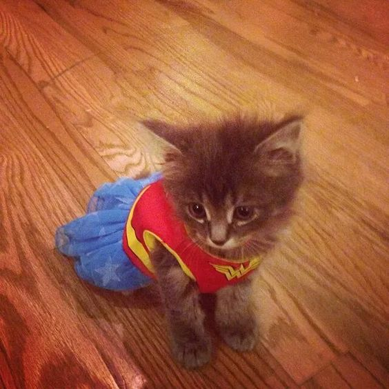 Kittens in costumes