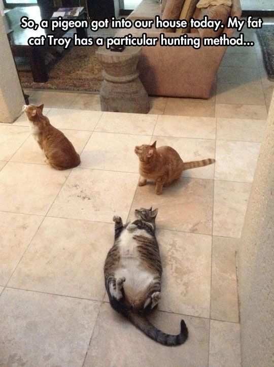 hilarious pictures of fat cats - photo #25