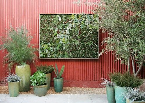Succulent wall -- be still my heart!: