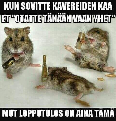 Pin By Kpruotsi On Huumori Funny Humor Memes