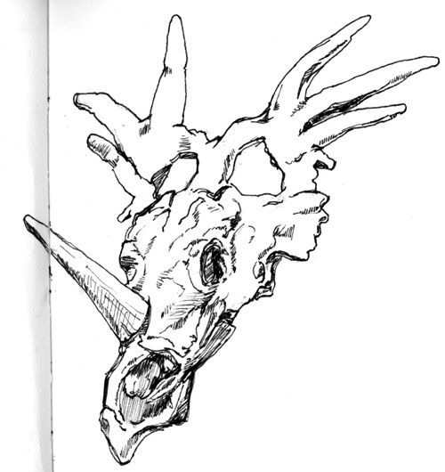 Dinosaur Fossils Drawing Of Drawings Dinosaur Fossils Fossils