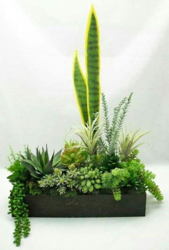 succulent plant for indoor garden #gardenIdeas #garden #gardening #plants #homeDecor #indoor