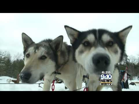 Hometown Tourist Nature S Kennel Sled Dog Racing And Adventures