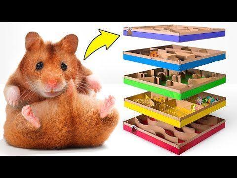 Mammals Laberintos Hamster Laberintos Para Hamster Ropa Para Hamster Hamster Meme Facetime Fisgon Hamster Hamster Cag In 2020 Hamster Cute Hamsters Hamster Diy