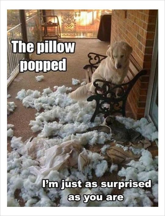 Pin By Julie Collette On Dogs Animal Captions Funny Animals Animal Quotes