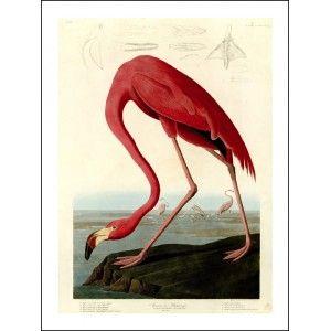 adios flamingo
