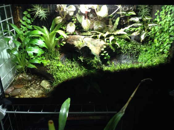 My 10 gallon Dendrobates leucomelas tank Dart frog vivs Pinterest ...