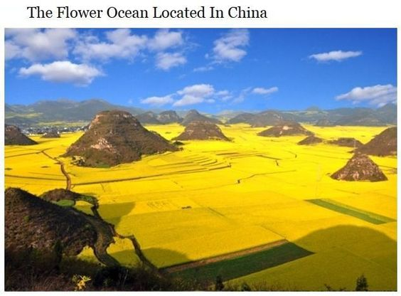 The incredible flower ocean located Luoping China
