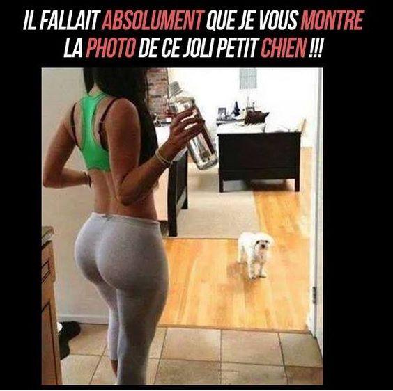 joli toutou !!! 9b3a3cbd9747b84c7e5088d041b4352b