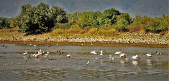 Kerkini Lake photo by Evangelia Apostolopoulou Mageira