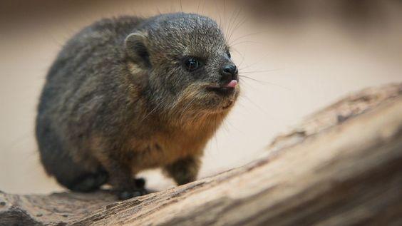Baby Animal Slideshow