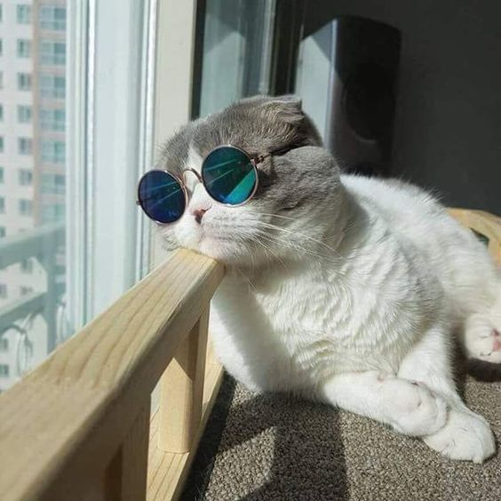 Super cool kitty!