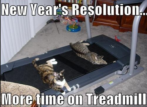 These Cats Are All Ready For 2020 New Year S Resolutions Memes Newyearsreso New Year Quotes Funny Hilarious New Years Resolution Funny Funny New Years Memes