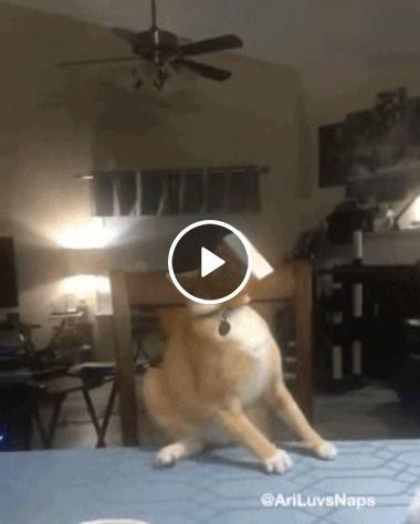 Gatinho cai em uma armadilha séria, isso é uma cilada!
