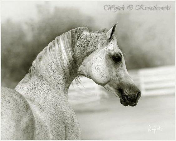 Arabian by Wojtek Kwiatkowski