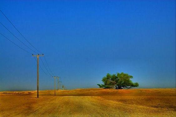 the_miraculous_tree_640_07 砂漠の中に1本だけの命の木