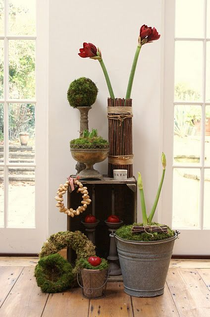 Pinterest the world s catalog of ideas for Amaryllis christmas decoration