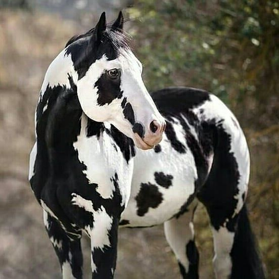 Pin On Just Horses