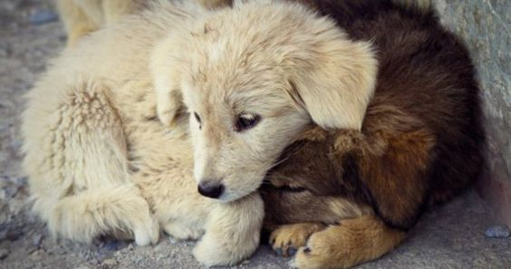PETITION - Prohibit any animal to animal abuser.  Prohibir tener animales a quien tenga ya un antecedente por maltrato animal