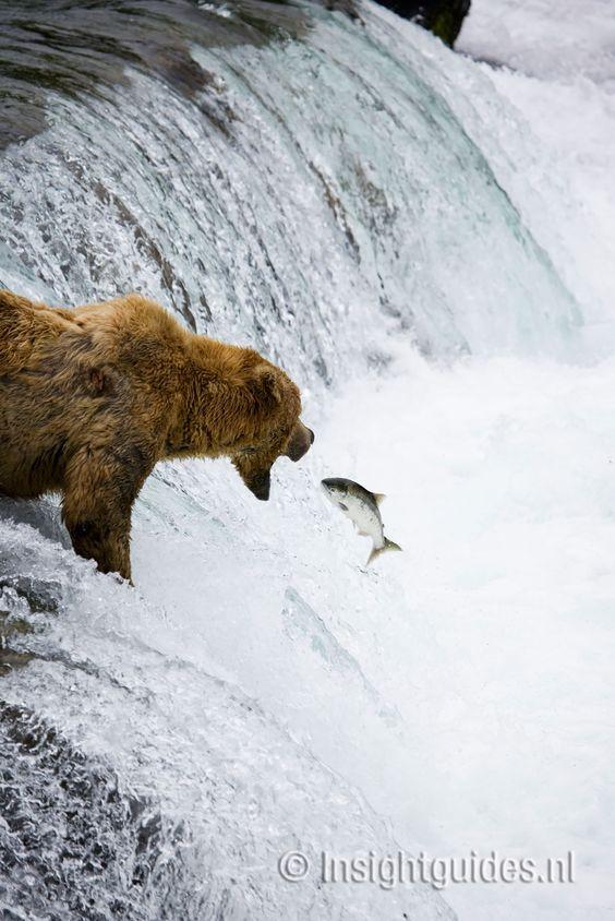 Grizzlybeer.