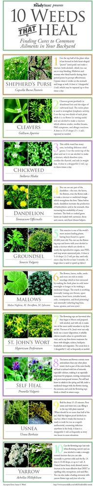This is a great graphic on how weeds – found in your own yard – can be used to help heal sicknesses, burns, sores and other ailments. | herbology, herbalism, healing plants, herbal medicine