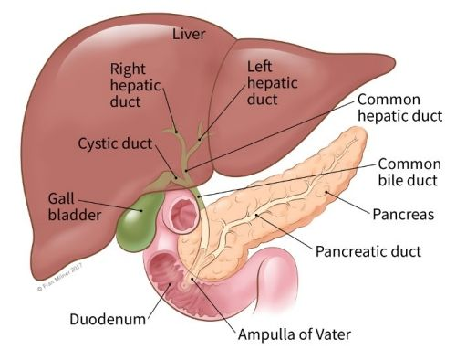 Best Place For Treatment Of Bile Duct Cancer