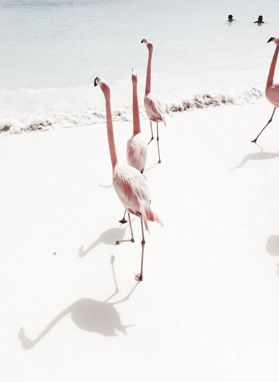 Pink Flamingos on the Light Blue Sea | Tao of Sophia