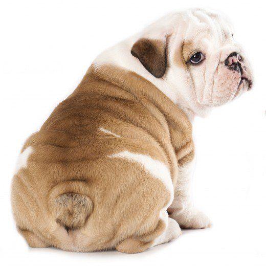 Funny Bulldog Names For Males And Females Bulldog Names Dog