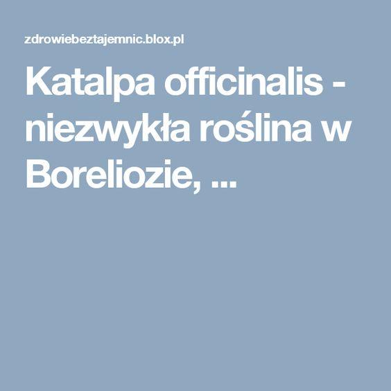 Katalpa officinalis - niezwykła roślina w Boreliozie, ...