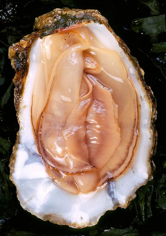 """Aphrodisiac  Oysters were documented as a aphrodisiac food by the Romans in the second century A.D as mentioned in a satire by Juvenal. He described the wanton ways of women after ingesting wine and eating """"giant oysters"""". An additional hypotheses is that the oyster resembles the """"female"""" genitals. In reality oysters are a very nutritious and high in protein"""