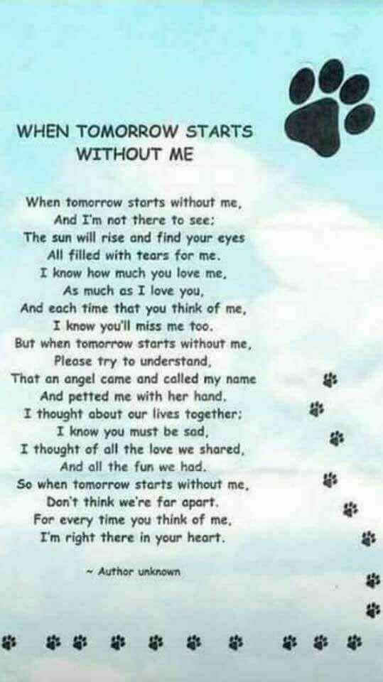 93 Facebook Pet Loss Grief Dog Poems Pet Remembrance