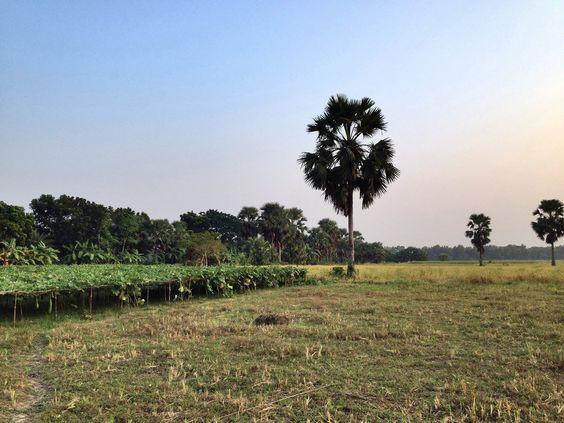 https://flic.kr/p/QiJnM3 | Beautiful Bangladesh - 2